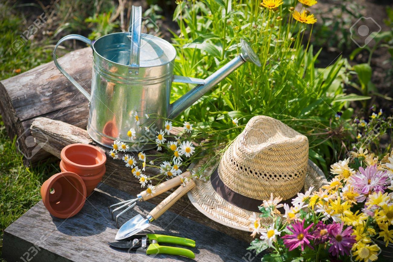 Подарки в сад и огород